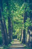 Retro Style Forest Path Stock Photo