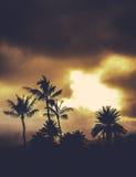Retro Style Hawaii Palms At Sunset Royalty Free Stock Photo