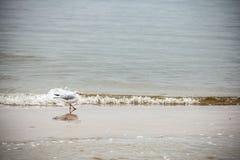 Retro style nature background. Bird on the beach Royalty Free Stock Photos