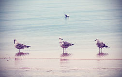 Retro style nature background. Birds on the beach Stock Image