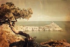 Juniper tree on rocky coast of Black sea royalty free stock image