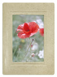 Retro style postcard red poppy Royalty Free Stock Images