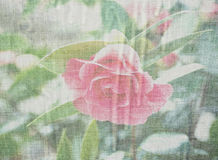Retro style rose Stock Photos