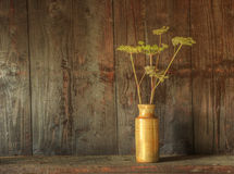 Retro style still life of dried flowers in vase. Still life image of dried flowers in rustic vase against weathered wooden background Royalty Free Stock Photos