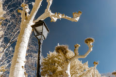 Retro-style street lamp and trees in infrared view Stock Images