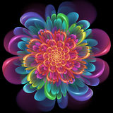 Retro style symmetrical colorful floral design. With whorled spiral petals in blended color gradients of pink, purple, green, orange and yellow on a black Stock Photo