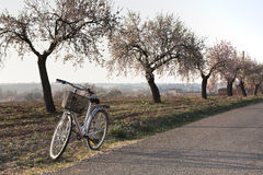 Retro-styled bicycle and almond trees in bloom. Rural scene including a classic bicycle and some almond trees in bloom Stock Photos