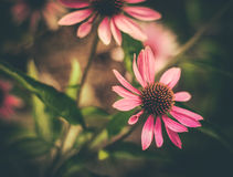 Retro Styled Flowers Royalty Free Stock Images