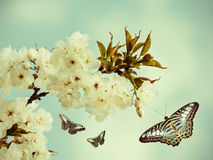 Retro styled image of butterflies in an orchard Stock Image
