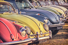 Retro styled image of a row of vintage Volkswagen Beetles from t Stock Photo