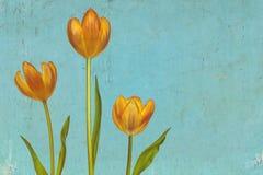Retro styled image of three orange tulips Stock Photography