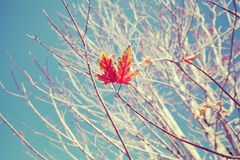 Retro stylized image of last leaves on a tree. Stock Images