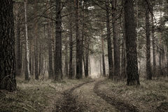 Retro stylized photograph of dirt road in a pine forest Stock Photography