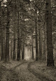 Retro stylized photograph of dirt road in a pine wood Royalty Free Stock Images