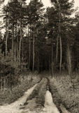 Retro stylized photograph of a track in the spring pine forest Stock Photos