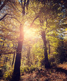 Retro stylized picture of autumnal forest Royalty Free Stock Photography