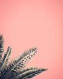 Retro Stylowy drzewko palmowe projekt Obrazy Stock