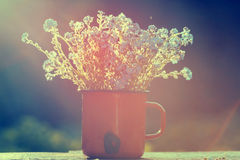 Retro summer background with forget me not flowers Stock Photos