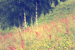 Retro summer meadow Stock Photography