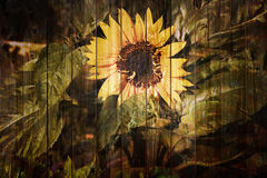 Retro sunflower background Stock Photo