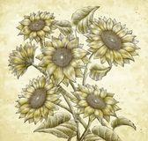 Retro Sunflower elements Royalty Free Stock Photo