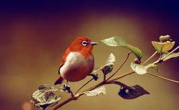 Retro tapet för gullig fågel Royaltyfri Foto
