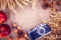 Retro tela da imballaggio delle spighette del grano della mela della macchina fotografica della foto Fotografie Stock Libere da Diritti