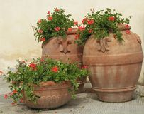 Retro- Terrakottavasen mit Pelargonienblumen Lizenzfreie Stockfotografie