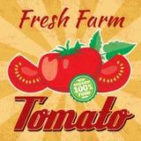 Retro tomato vector poster Stock Photos