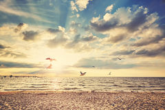 Retro toned beach at sunset with flying birds Royalty Free Stock Image