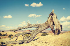 Retro toned dead tree, climate change concept picture Royalty Free Stock Photo