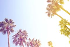 Tops of palm trees and clear blue sky with vintage tone filter coloring.