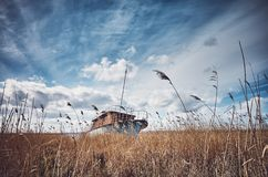 Retro toned picture of a shipwreck in the reeds.  stock photos