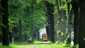 Retro Tram (1909-1910 model), old trees alley and runner. Riga's Retro tram is a 1909-1910 model fully restored in 1982, based on old drawings and photos stock video