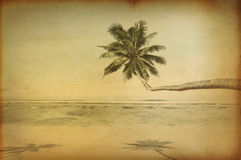 Retro Tropical Beautiful Beach with Palm Tree Stock Photos
