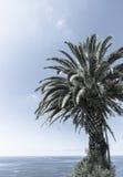 Retro tropical palms against blue sky. Stock Photo