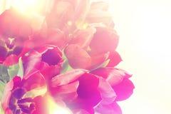 Retro tulips image Stock Photos