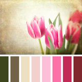 Retro tulips palette Stock Photos