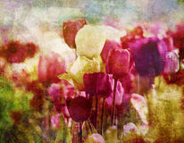 Retro tulips in springtime Royalty Free Stock Images
