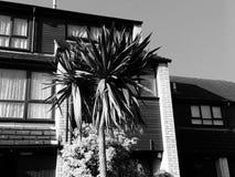 Retro uitstekende exotische tropische palm stock foto's