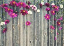 Retro utformad blom- bakgrund för tappning Sommar blommar på weathe Arkivbilder
