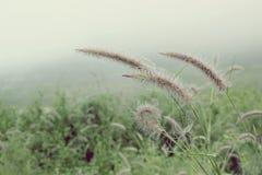 Retro van grasgebieden Stock Fotografie