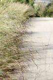 Retro van weg en gras Stock Afbeelding
