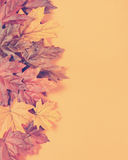 Retro vintage filter Autumn Leaves on modern trend orange background Stock Photography