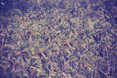 Retro vintage filtered background made of coconut palms Stock Photo