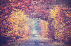 Retro vintage filtered picture of an autumnal forest. Stock Photos