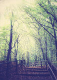 Retro vintage filtered picture of wooden path in forest Stock Photography