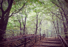 Retro vintage filtered picture of wooden path in forest Royalty Free Stock Photos