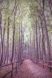 Retro vintage filtered picture of wooden path in forest Stock Image