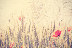 Retro vintage filtered wild meadow with poppy flowers at sunrise. Nature background with shallow depth of field stock photo